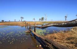 Outback waterhole Royalty Free Stock Photos