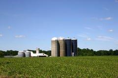 outbuildings Джерси фермы новые Стоковое Изображение RF