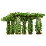 Outdoor arbor with ivy pergola Royalty Free Stock Photo