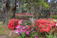 Outdoor Azalea Garden Royalty Free Stock Photography