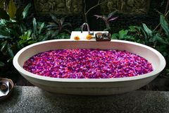 Outdoor bath with tropical pink flowers for relax.Spa,organic an stock photography