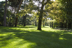 Outdoor, beautiful park with leafy trees Stock Photos