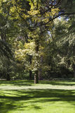 Outdoor, beautiful park with leafy trees Royalty Free Stock Images