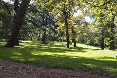 Outdoor, beautiful park with leafy trees Royalty Free Stock Image