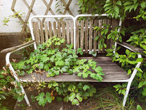 Outdoor Bench With Overgrown Plants. An outdoor bench sitting on a stone bottom. Plants are growing from below the bench through the seat. Plants from the side royalty free stock image