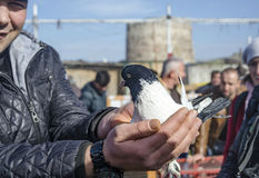 Outdoor Bird Market in Istanbul Stock Images