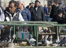 Outdoor Bird Market in Istanbul Stock Photography