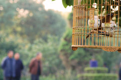 Outdoor birdcage Royalty Free Stock Photos