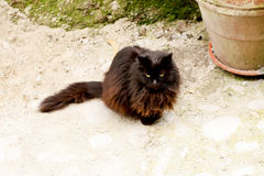 Outdoor black brown cat Royalty Free Stock Photos