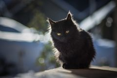 Outdoor black cat. Look at me royalty free stock image
