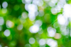 Outdoor bokeh background Royalty Free Stock Photography