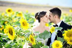 Outdoor Bride and groom. The groom and bride in the sunflower garden Royalty Free Stock Photography