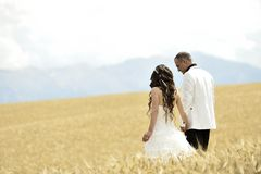 Outdoor Bride and groom. Walking in wheat field by natural morning golden sunlight Stock Photos