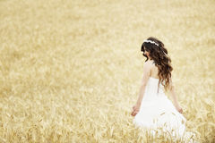 Outdoor Bride smiling. Outdoor bride walking in wheat field by natural morning golden sunlight Stock Images