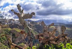 Outdoor cactus with Ronda, Spain as background royalty free stock photos