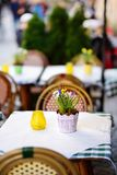 Outdoor cafe on sunny spring day with natural flowers in pot Stock Photography