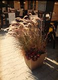 Outdoor Cafe in Warsaw, Poland Royalty Free Stock Photography