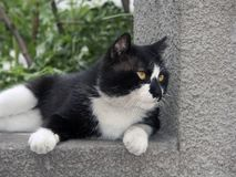 Outdoor cat. Live in the cat outdoors Royalty Free Stock Image