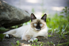 Outdoor cat. Street stranger Royalty Free Stock Images