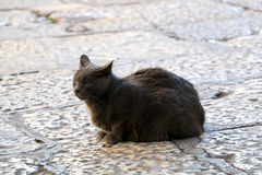 Outdoor Cat. Beautiful grey stray cat on a cobblestone street. Selective focus stock photos