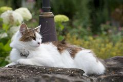 Outdoor cat lies on a stone well Royalty Free Stock Photo