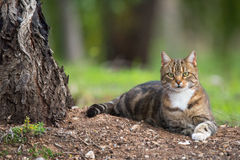 Outdoor Cat Laying Under Tree Stock Photos