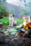 Outdoor cat. Cat see the fire Royalty Free Stock Photography