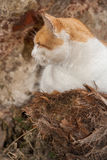 Outdoor cat Stock Photography