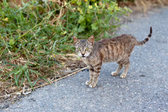 Outdoor cat. Small homeless cat on a yard Royalty Free Stock Photography