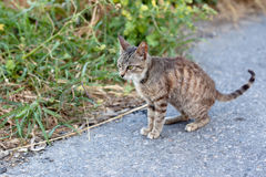Outdoor cat. Small homeless cat on a yard Stock Image