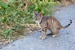 Outdoor cat Stock Image