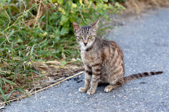 Outdoor cat. Small homeless cat on a yard Stock Photo