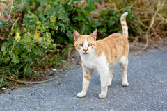 Outdoor cat. Small homeless cat on a yard Stock Photography