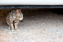 Outdoor cat. Small homeless cat on a yard Royalty Free Stock Photos