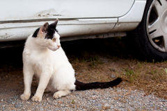 Outdoor cat. Small homeless cat on a yard Stock Photos