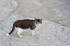 Outdoor cat. Small homeless cat on a yard Stock Images