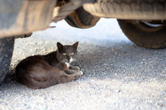 Outdoor cat. Small homeless cat on a yard Royalty Free Stock Photo