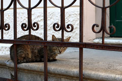 Outdoor Cat. Stray cat sleeping outdoor, behind the fence. Selective focus royalty free stock image