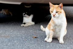 Outdoor cats Royalty Free Stock Photography