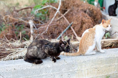 Outdoor cats Royalty Free Stock Image