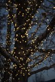 Outdoor Christmas decorations of illuminated fairy lights wrapped around winter tree branches. Outdoor Christmas decorations of illuminated fairy lights wrapped royalty free stock image