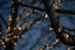Outdoor Christmas decorations of illuminated fairy lights wrapped around winter tree branches. Outdoor Christmas decorations of illuminated fairy lights wrapped royalty free stock photography