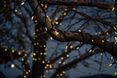 Outdoor Christmas decorations of illuminated fairy lights wrapped around winter tree branches. Outdoor Christmas decorations of illuminated fairy lights wrapped stock photos