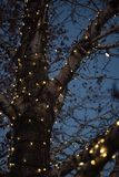 Outdoor Christmas decorations of illuminated fairy lights wrapped around winter tree branches. Outdoor Christmas decorations of illuminated fairy lights wrapped stock images