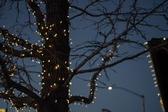 Outdoor Christmas decorations of illuminated fairy lights wrapped around winter tree branches. Outdoor Christmas decorations of illuminated fairy lights wrapped royalty free stock photos