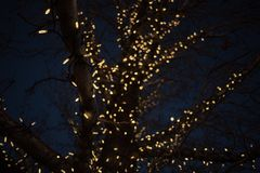 Outdoor Christmas decorations of illuminated fairy lights wrapped around winter tree branches. Outdoor Christmas decorations of illuminated fairy lights wrapped stock image