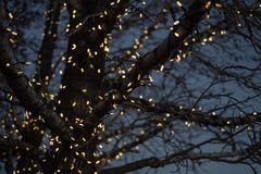 Free Outdoor Christmas Decorations Of Illuminated Fairy Lights Wrapped Around Winter Tree Branches Royalty Free Stock Photos - 135016008