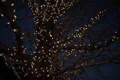 Free Outdoor Christmas Decorations Of Illuminated Fairy Lights Wrapped Around Winter Tree Branches Royalty Free Stock Photos - 135016078