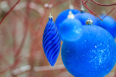 Outdoor Christmas decorations with textured blue bauble ornaments hanging on tree red branches Stock Image