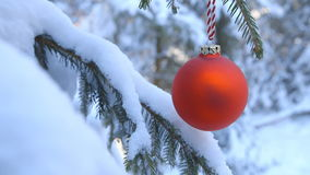 Outdoor Christmas Tree - Close-up of a Christmas ball hanging on a branch of an outdoor Christmas tree stock video footage
